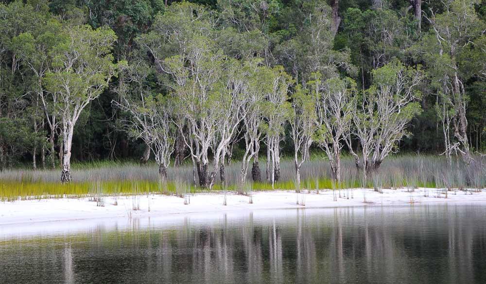 Poona Lake rainforest walk