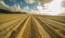 Four wheel drive tracks Fraser Island