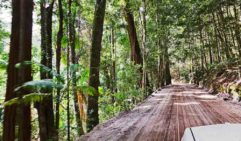 Fraser Island's rainforest interior, where the beauty (and driving challenges) really begin.