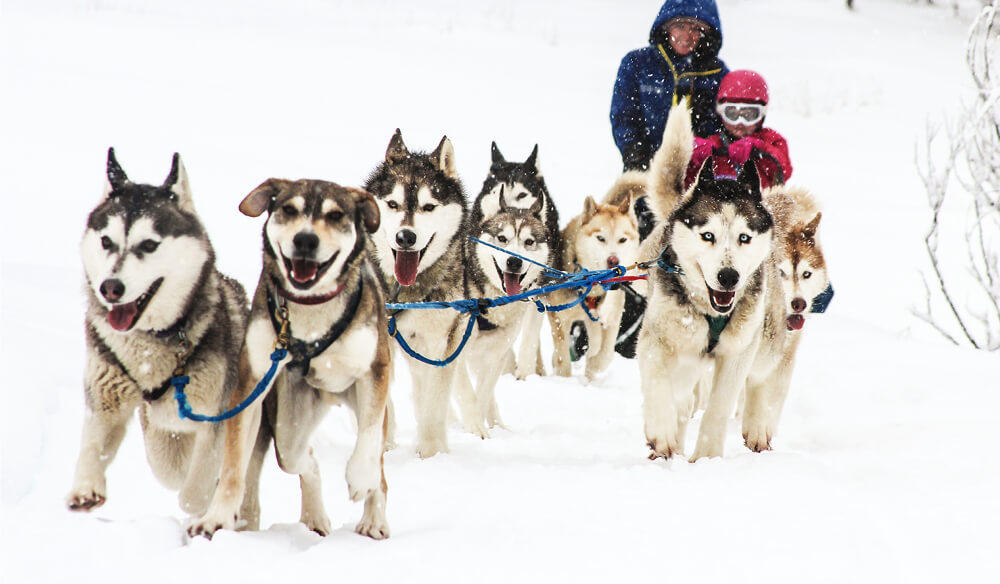 Sled Dog Tours