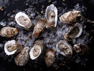 Oysters seafood water ocean south coast