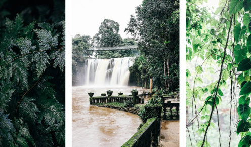 From left to right: The beautiful flora that engulfs Paronella Park. Mena Creek falls in full flow. Discover Paronella Park through the rain forest of North Queensland (photo: Elise Hassey).
