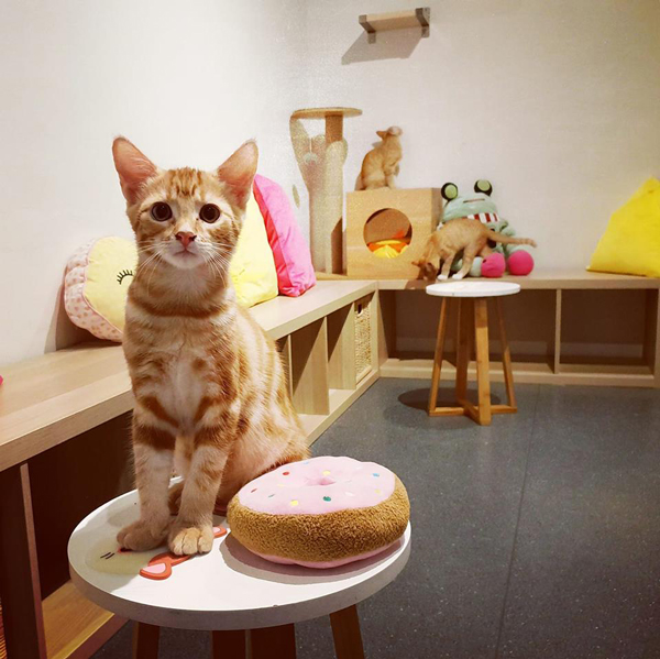 Surry Hills' Catmosphere Cafe.