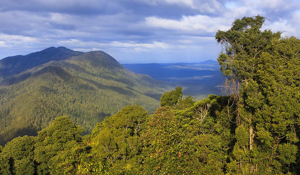 Rainforest and hills view from the Dorigo Skywalk, Dorigo National Park