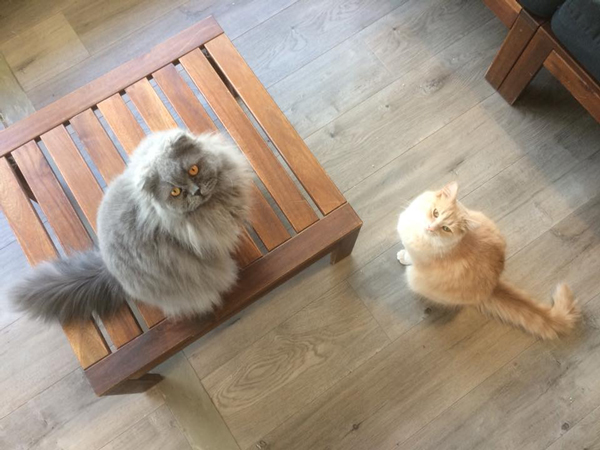 Residents of Hashtag Meow Cafe, Adelaide.