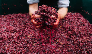 Ochota Barrels, wine berries creating vineyards white red