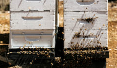 Each tier of a beehive contains eight to 10 frames that bees fill with honeycomb (photo: Brook James).