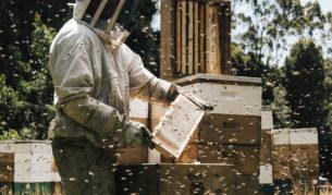 bee nectar Tasmania frames farm honey