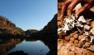 bush food native Katherine river