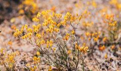 WA is home to 12,000 species of flowering natives, 70 per cent of which are found nowhere else in the world.