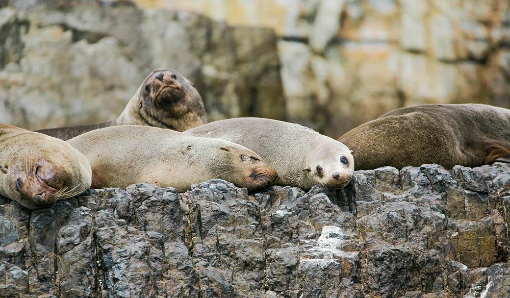 Relaxing seals