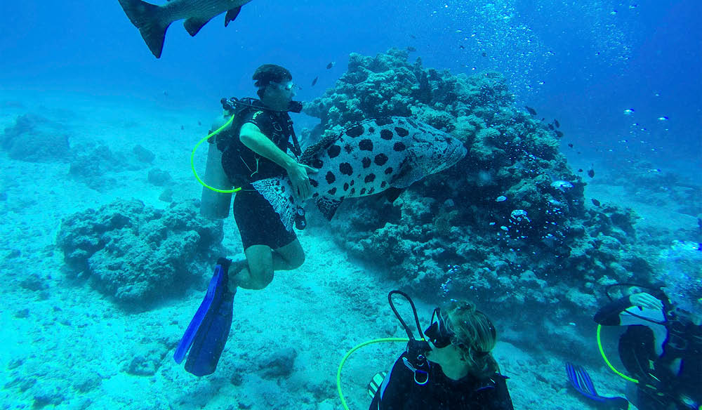 Scuba dive on Lizard Island