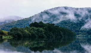 queensland nature flora fauna daintree rainforrest tour river