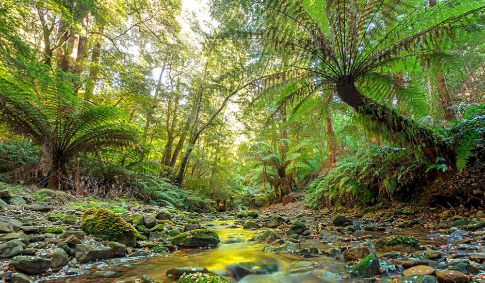 Deep green rain forests are littered through Eurobodalla