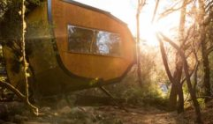 The sun sets through the trees behind one of Blue Derby Pods Ride's intriguing abodes (photo: Natalie Mendham).