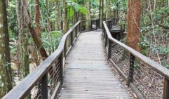 Fraser Island's lush interior is just as impressive as its aquatic playground.