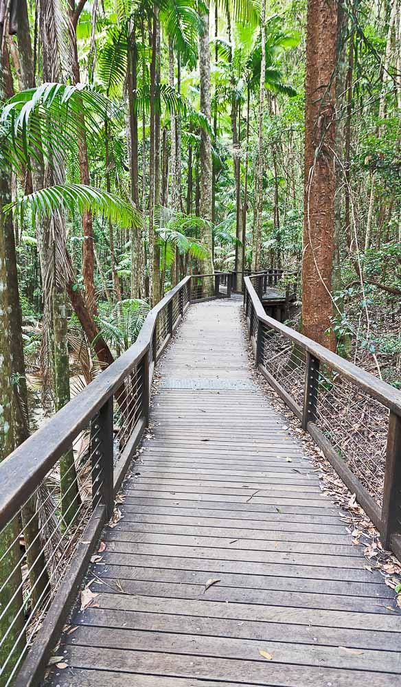 Rainforest Boadwalk Fraser Island