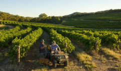 Take your time and wander around the Clare's Riesling-focussed vineyards.