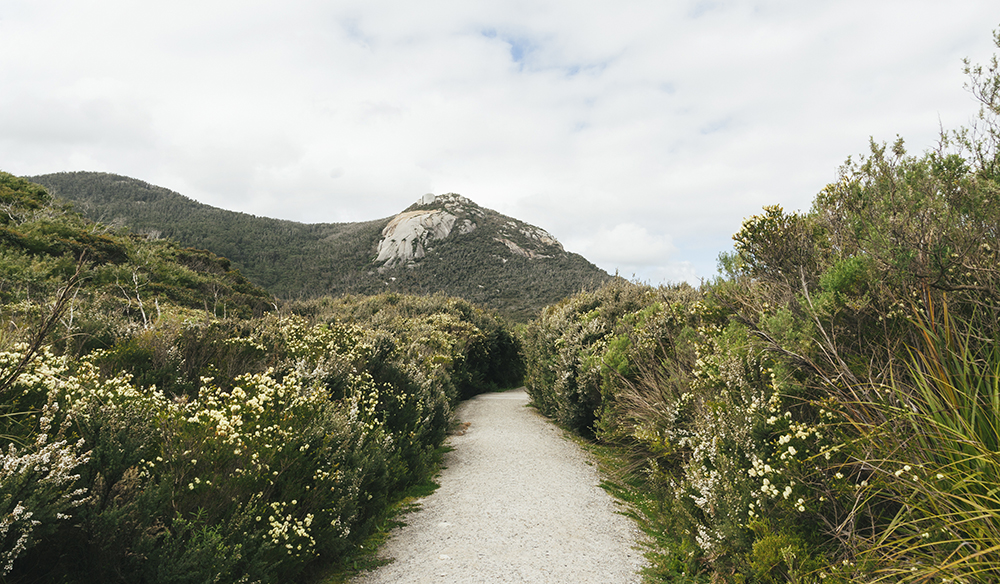Hiking trail in Wilsons Promontory National Park, Victoria, Australia.
