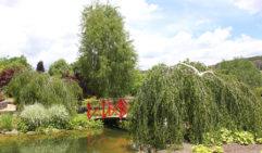The little red bridge, highlight of Mayfield's Water Garden.