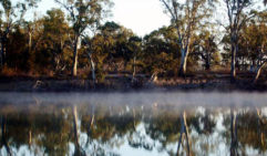 While beautiful, morning mists can make it difficult to navigate.