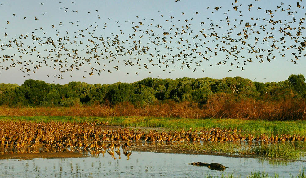 Arnhemland Safaris