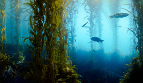 What lies beneath: Tasmania's Avatar-like seascape is rapidly changing.