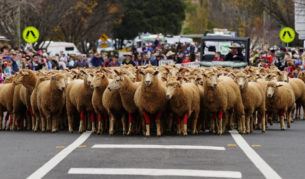 best upper Hunter Valley towns Merriwa festivals