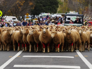best upper Hunter Valley towns Merriwa festivals