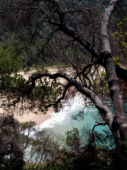 With turquoise waters and a quiet stretch of golden sand, Steamers Beach is worth the steep descent.