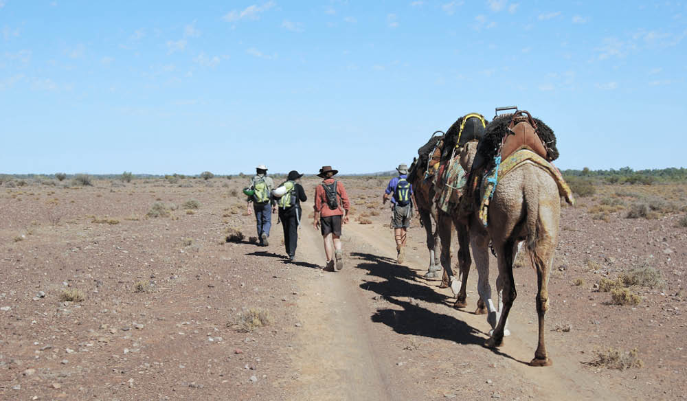 Why you have to try camel trekking in South Australia