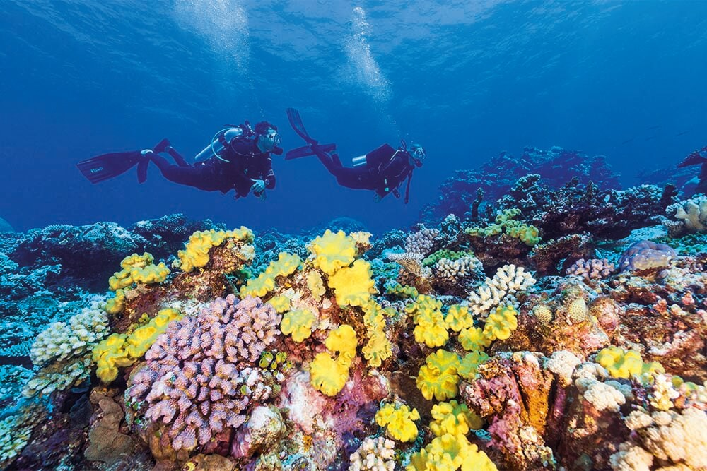 Dive over colourful Agincourt Reef. Image: Tourism and Events Queensland