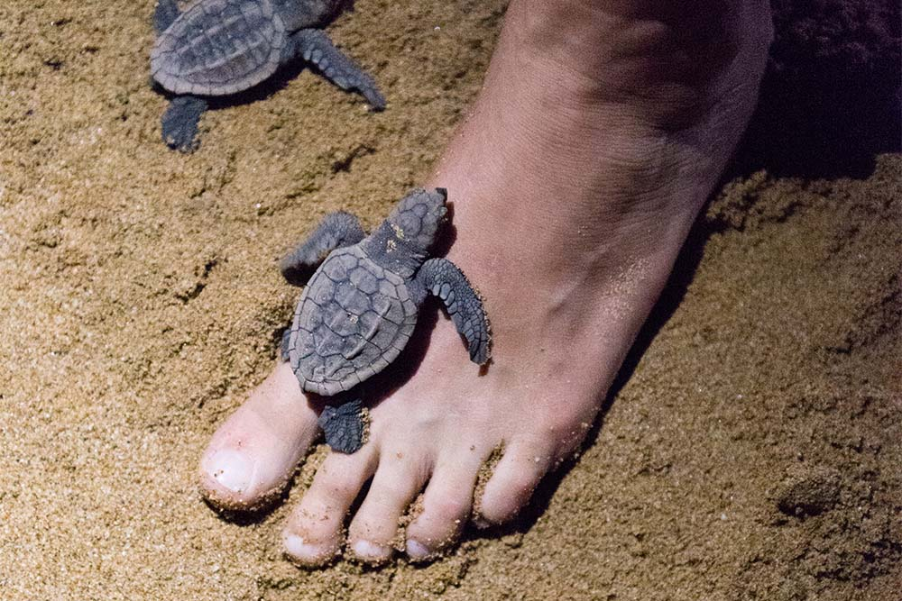 Watch the baby turtles find their way in this world