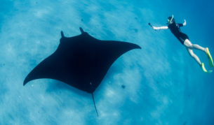 Swim with manta rays.