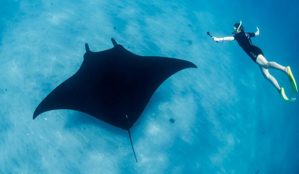Swim with manta rays.