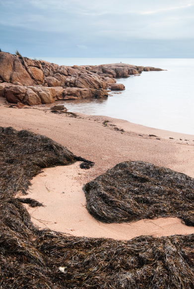 Seaweed swirls, Freycinet, Tasmania.