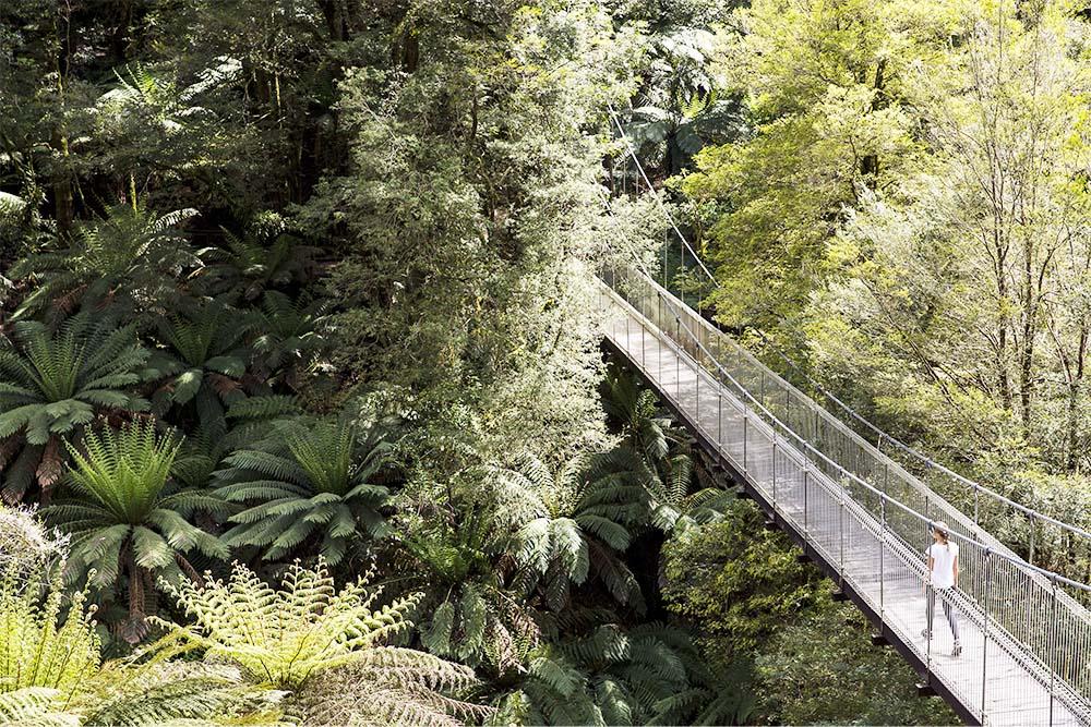 This graceful suspension bridge is set in a cool-climate rainforest