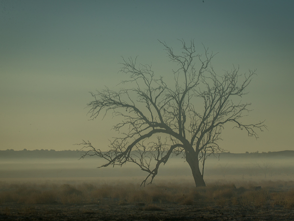 The fog rests over the trees at Big Red Bash Festival, Birdsville