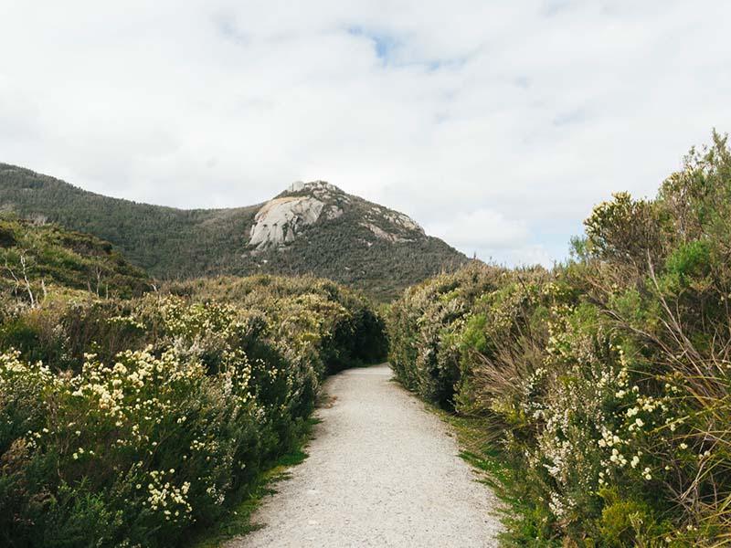 Salt bush on the East Coast of Australia