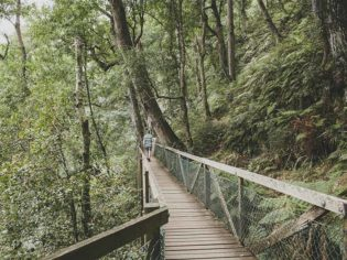 Waterfall Way: Coffs Harbour's Must-Do Adventure