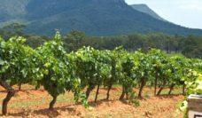 Tyrrell's Wines Hunter Valley