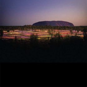 Uluru Field of Light, NT