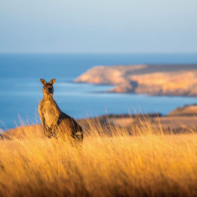 South Australian travel deal package