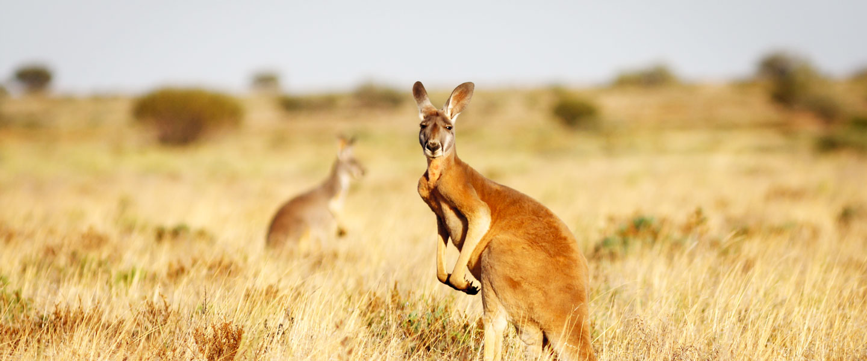 The Kangaroo Collection Posts | Facebook