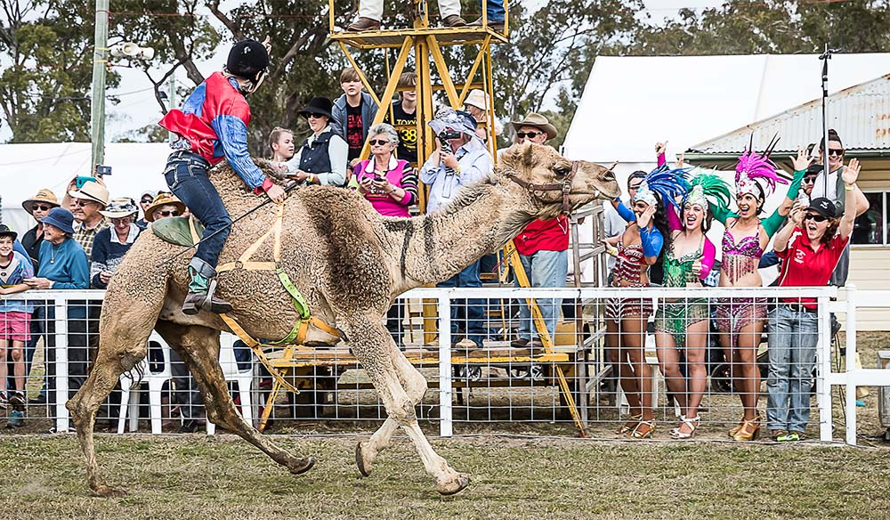 Camel races Western Downs