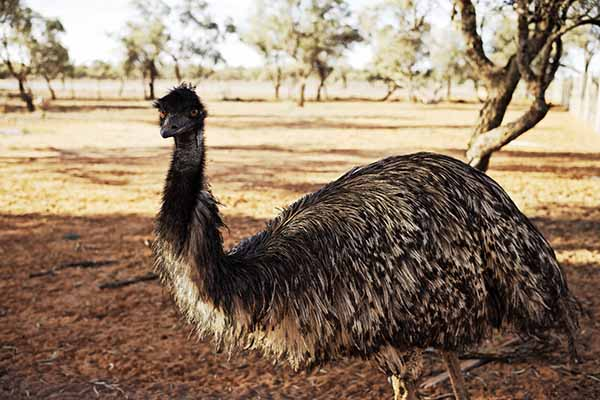 NSW Outback, Darling River Run, Mungo