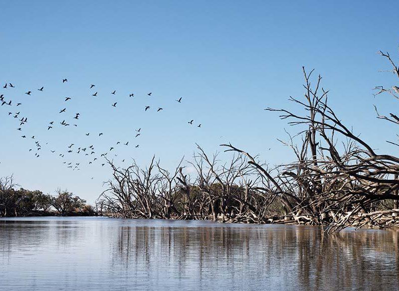 Darling River Run, Menindee