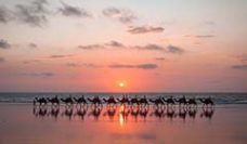 Camels on Cable Beach at sunset