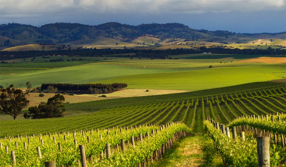 Pindarie Winery SA