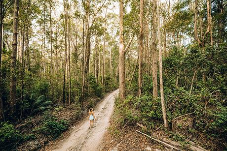 Fraser Island Walking Trail
